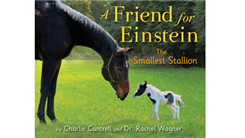 Smallest Horse To Star In A Best-Selling Children's Book