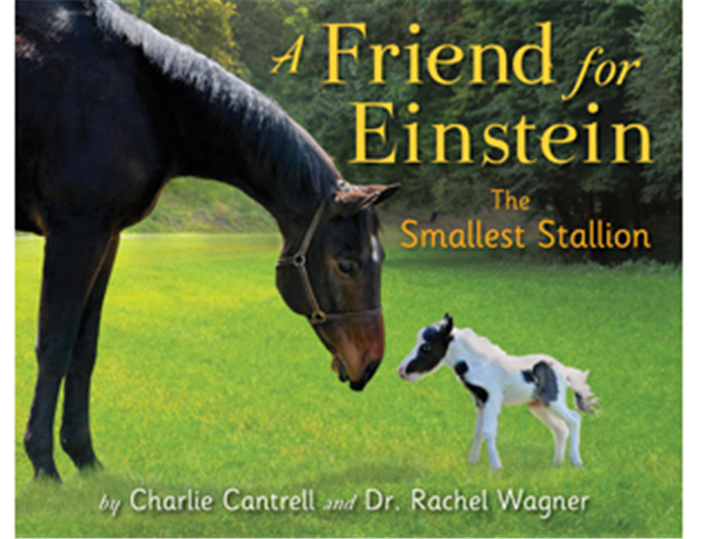 Smallest Horse To Star In A Best-Selling Children\'s Book