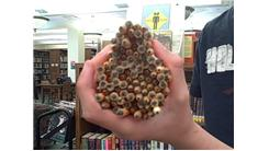 Most Golf Pencils Held In One Hand In A Public Library