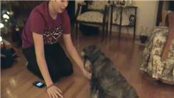 Most Alternate Paw Handshakes Elicited From A Dog In 30 Seconds