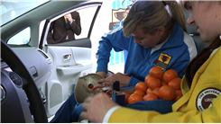 Most Tangerines Fit Into A Football Helmet In A Prius