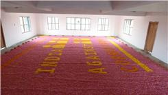 Largest Flower Mosaic