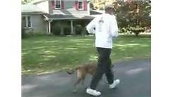 Fastest 1/4 Mile Racewalk Accompanied By A Dog With A Swahili Name