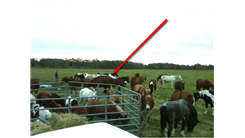 Most Horses Visible In A Photograph Of A Car