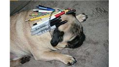 Most Writing Utensils Fit Inside A Pug's Collar